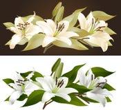 百合florals 图库摄影