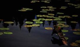 百合Leaf湖夏天淡色 库存图片
