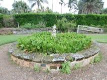百慕大植物园 库存照片