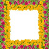 百日菊属花框架 图库摄影