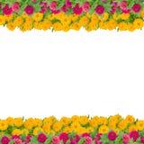 百日菊属花框架 库存照片