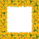 百日菊属花框架 免版税库存图片
