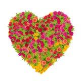 百日菊属花的心脏 免版税库存图片