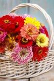 百日菊属花花束在柳条筐的 库存照片