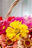 百日菊属花花束在柳条筐的 免版税库存图片