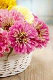 百日菊属花花束在柳条筐的 库存图片