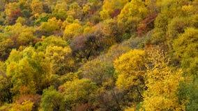 百花山Mountainï ¼ Œ北京五颜六色的山坡  免版税图库摄影