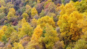 百花山Mountainï ¼ Œ北京五颜六色的山坡  库存图片