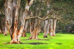 百年公园纸树 免版税库存图片