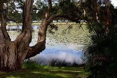 百年Parklands池塘悉尼 库存图片