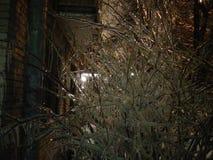 冻结的三个分支在莫斯科 库存照片