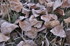死的下落的叶子在晚秋天 免版税库存照片