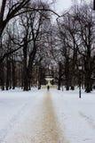 的人走沿雪道的长的远距照相观点在一个公园在华沙,波兰,无树留下所有  库存图片