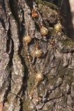 在树皮的人造珠宝 免版税图库摄影