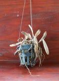 死的兰花植物 免版税库存照片