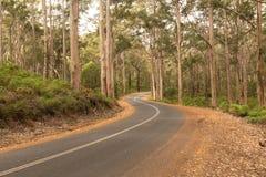 绞的农村路在Karri森林里 库存照片