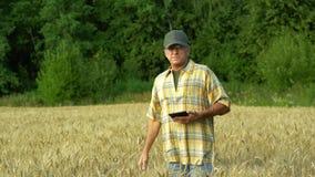的农艺师现场研究在领域的谷物丰收并且记录关于一种片剂的信息在晴朗 股票视频