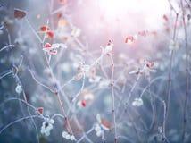冻结的冬天自然背景 库存图片
