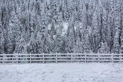 冻结的冬天风景 库存图片