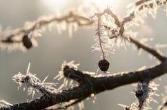 冻结的分支在阳光下 免版税库存图片
