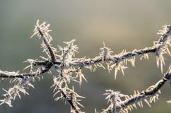 冻结的分支在阳光下 免版税库存照片