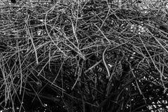 死的分支树 库存图片
