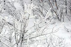 冻结的分行 免版税库存图片