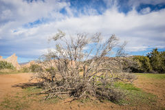 死的刷子在莫哈维沙漠 免版税库存照片