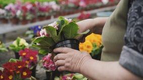 的卖花人caresing关于花幼木,撕毁的退色的叶子的观点 影视素材