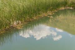 水的反射 图库摄影