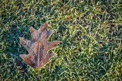 冻结的叶子冬天 免版税库存照片