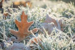 冻结的叶子冬天 库存图片
