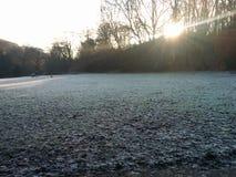 冻结的叶子冷的冬天霜坚硬地面 免版税库存照片