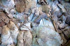 死的叶子和枝杈 免版税库存照片