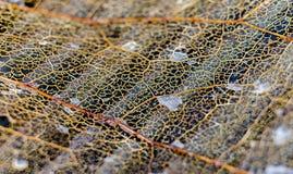 死的叶子摘要关闭 免版税库存图片