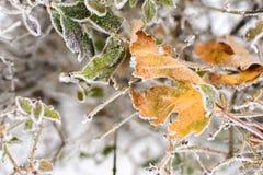 冻结的叶子背景 免版税库存照片