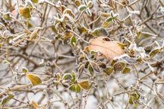 冻结的叶子背景 库存照片