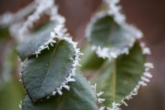 冻结的叶子细节 库存图片