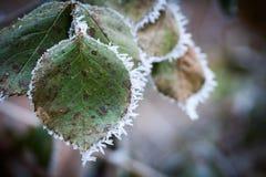 冻结的叶子细节 免版税库存图片