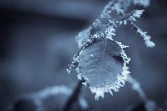 冻结的叶子细节 库存照片