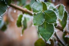 冻结的叶子细节 免版税库存照片