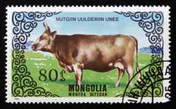 `的图象系列助长母牛`,大约1985年 免版税图库摄影