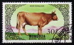 `的图象系列助长母牛`,大约1985年 图库摄影