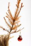 死的圣诞树 库存图片