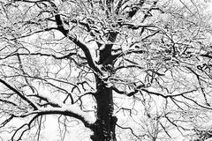 冻结的多雪的树和分支在结冰的冬天环境美化 库存照片