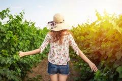 的女孩走通过有被伸出的胳膊的葡萄园的后面观点 享用在她的自由的妇女背面图本质上 库存照片