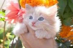 轻的姜小猫在背景颜色的手上 免版税图库摄影