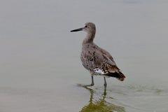 水的威利特在马利布海滩在8月 库存图片