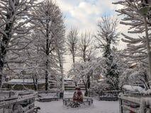 冻结的季节的罗马尼亚公园 免版税库存图片