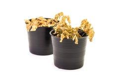死的室内植物 免版税库存照片